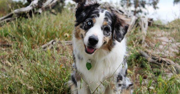 Goede voornemens hondenverzekering