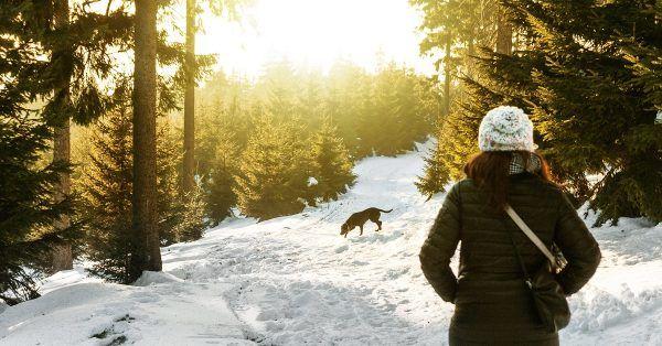 wintersport met je hond