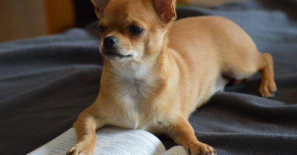 hond lezen