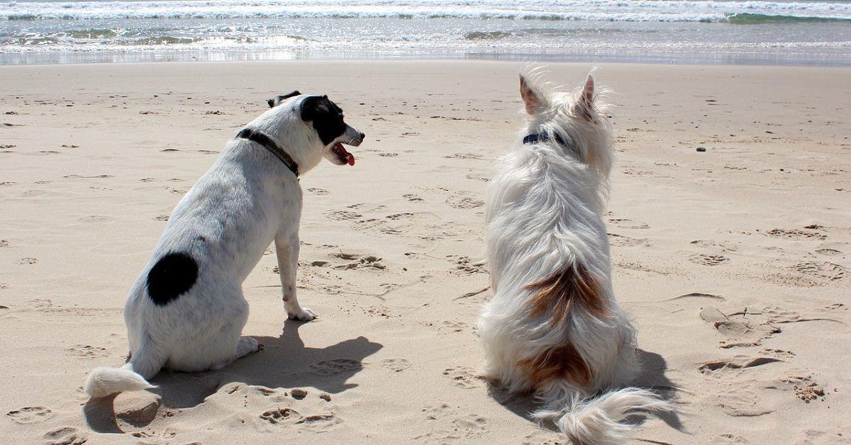 honden samen