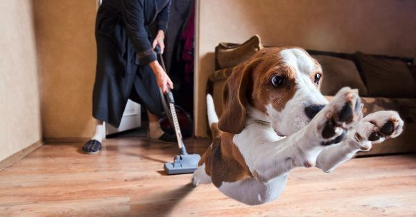 stofzuiger hond