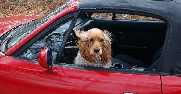 Autobench hond