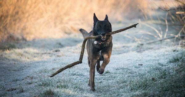 hond stokken