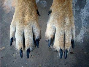 nagels hond