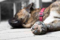 voetzolen hond