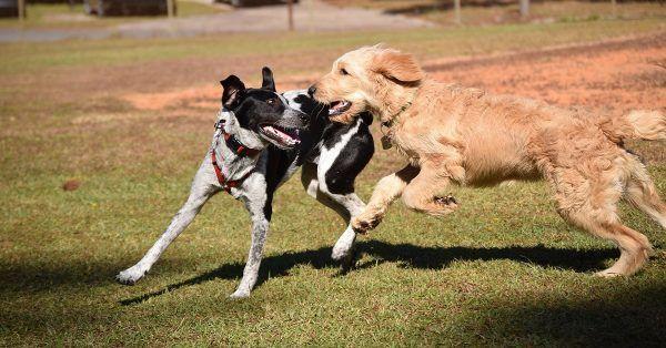 Honden opvang