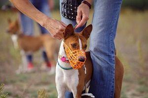 hond muilkorf