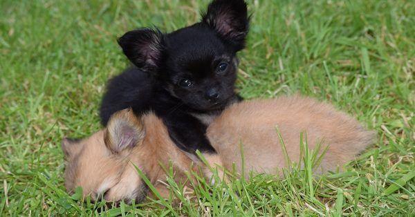 puppy ophalen