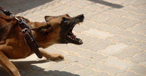 stress hond