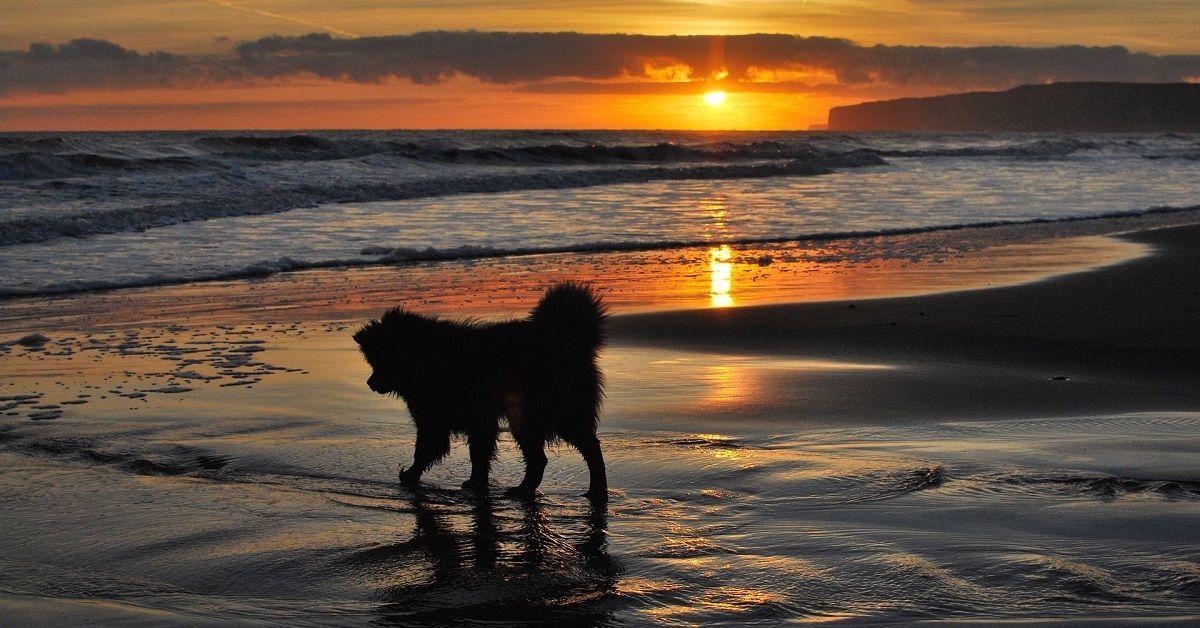 Top Hoe ga je om met het verlies van je hond? @QV64