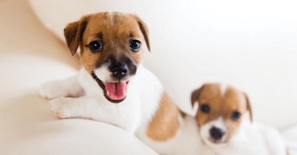 puppy-checklist