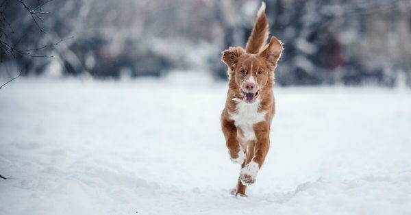 juiste temperatuur voor jouw hond in de winter