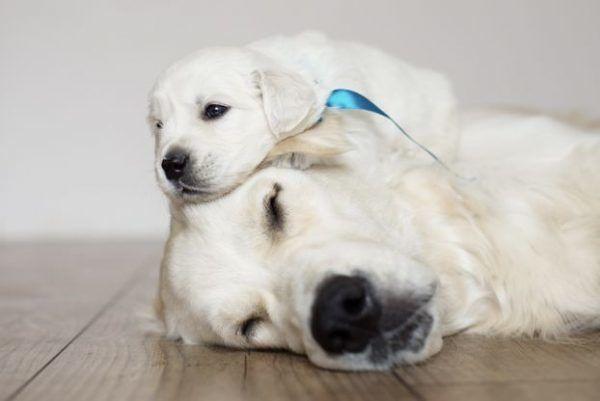 puppygroep.nl