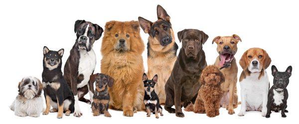 De-aanschaf-van-een-pup