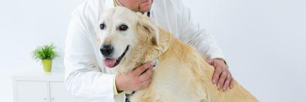 kosten dierenarts voor honden