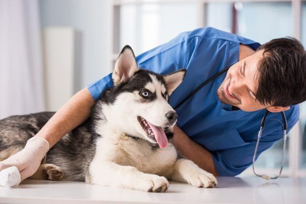 kosten inentingen en vaccinatie honden