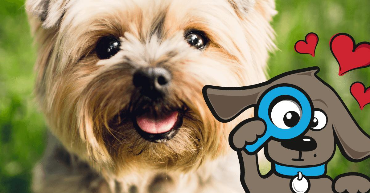 38 tekens dat de hond van je houdt
