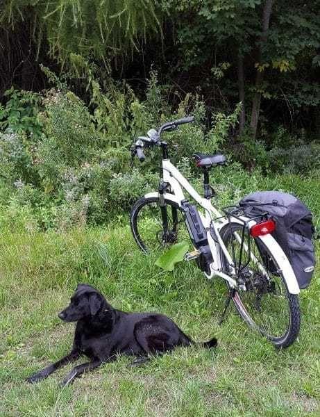 Hond aan de fiets