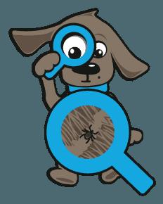 teken bij een hond