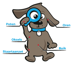 tekenbeet hond