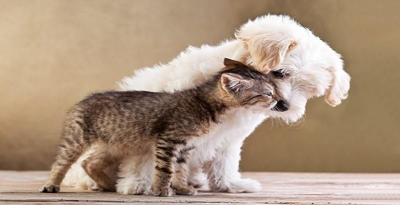 verzekering-huisdier