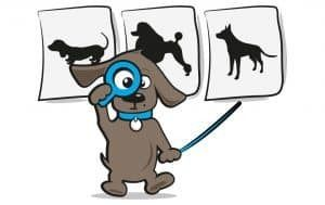 honden spreekbeurt