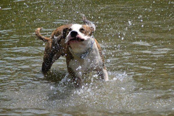 leer hond zwemmen