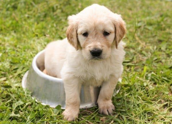 puppy voeren