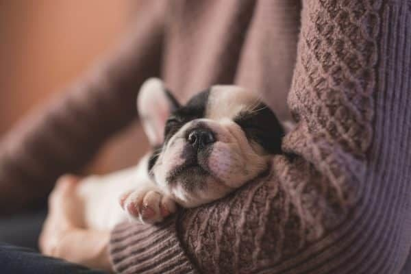 zorgen voor hond