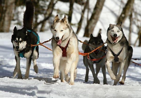 hond mee op wintersport