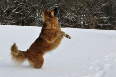 winter hond