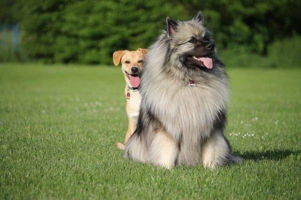 Hond kiezen reu of teef