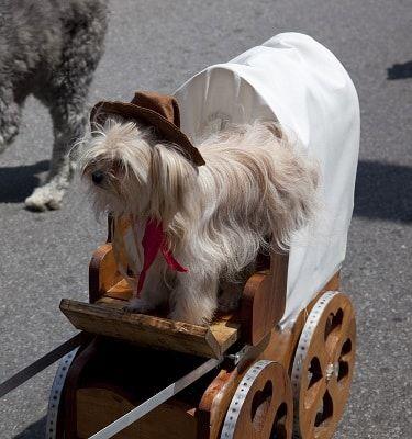 carnaval kleding hond