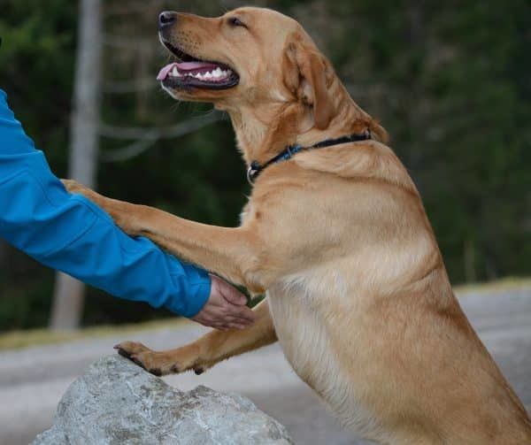 hoe communiceren honden