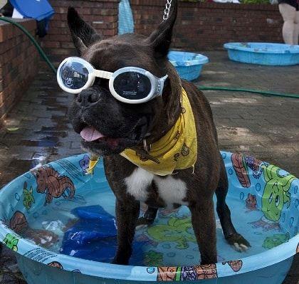 hond carnaval