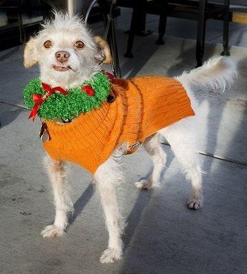 hond in carnavalskleding