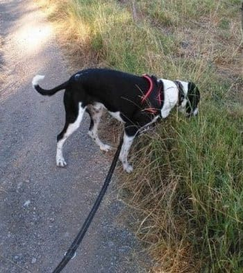 hond leren loslopen