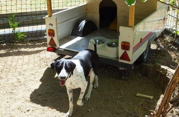 hond uit asiel ophalen