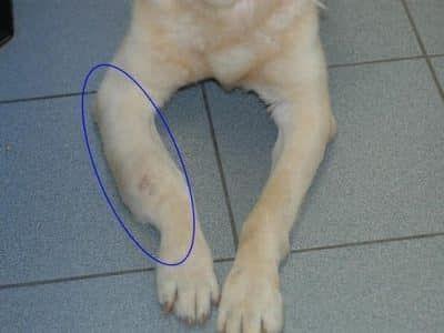 botkanker hond