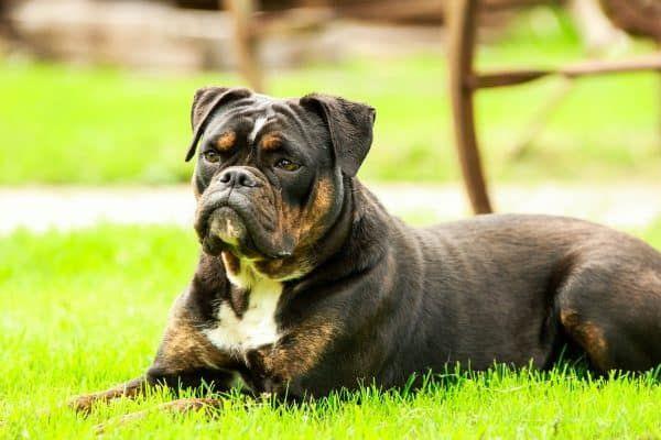 chip hond