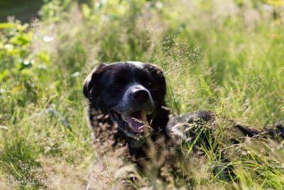 herplaatser hond
