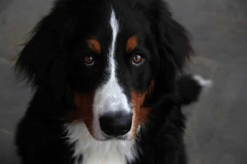 13 tips voor afvallen hond