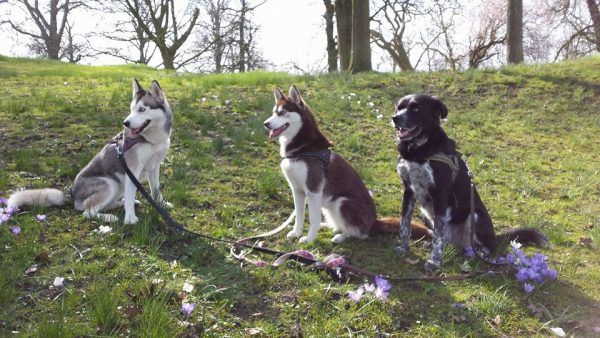 honden herplaatsing