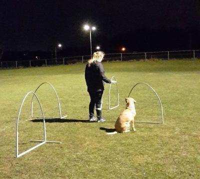 hoopers cursus met hond