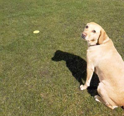 hoopers hondensport leren