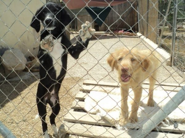 Aron en pup in het asiel in Spanje