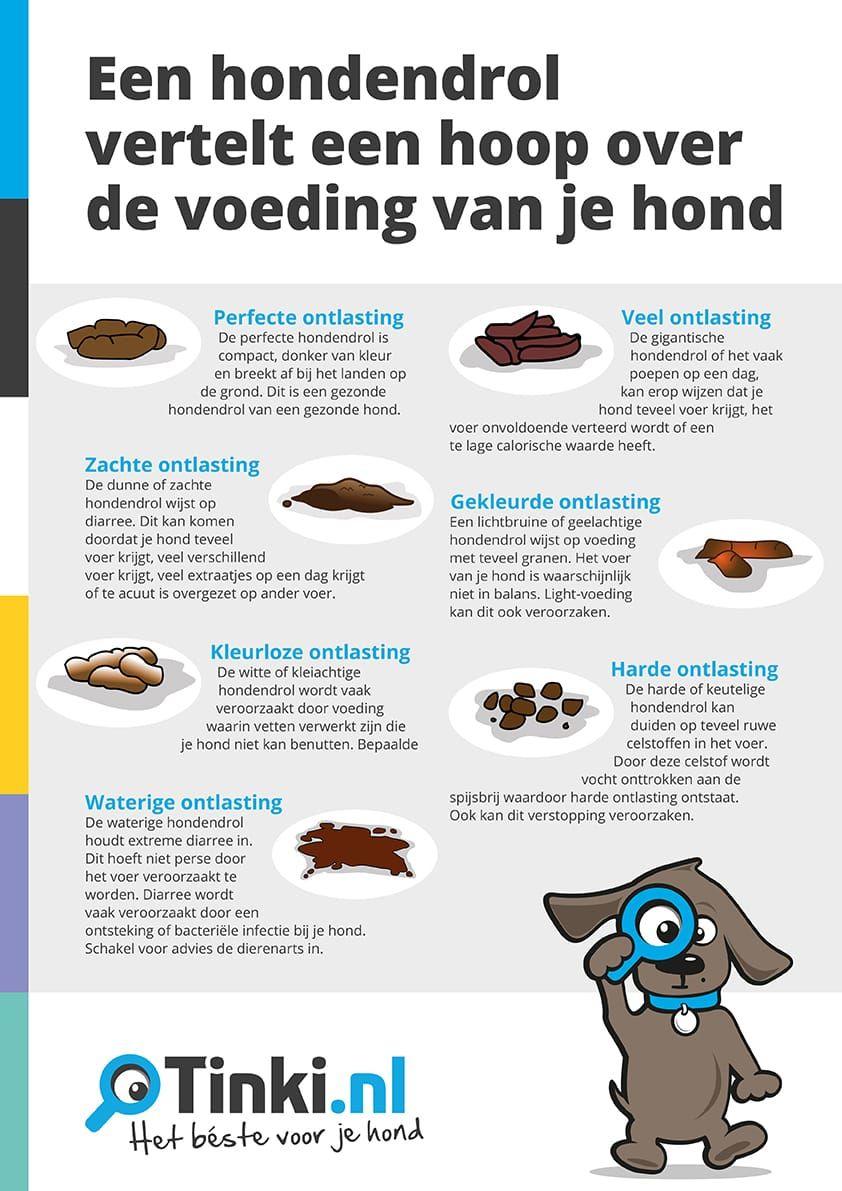 Infographic- Een hondendrol vertelt een hoop over de voeding van je hond