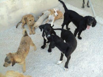 Puppyhuis in het asiel in Spanje
