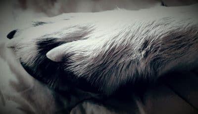 afscheid hond met epilepsie