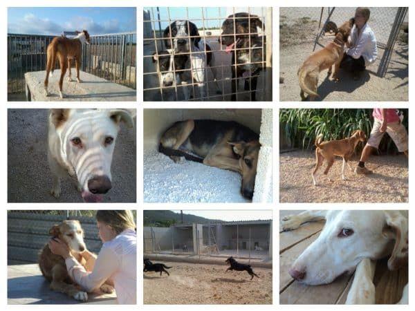 honden in asiel Spanje